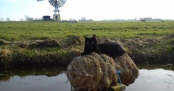 Lezersfoto: De eendenkorf is 'gekraakt' door de huiskat Lola.
