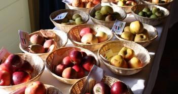 Lekkerste appelsap komt uit de Friese Wouden!