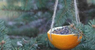 Voor de vogels: De smakelijke sinaasappel