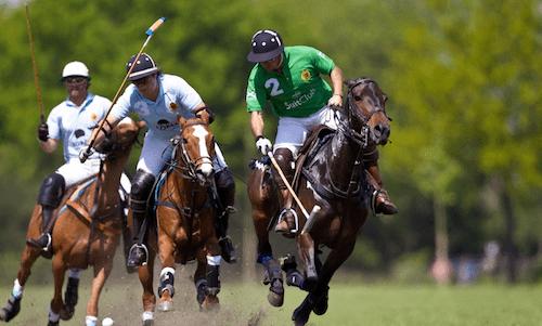 Rijs is decor voor allereerste polowedstrijd in Noord-Nederland ooit