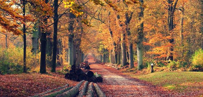 Evenementen in Friesland op 7, 8 en 9 oktober