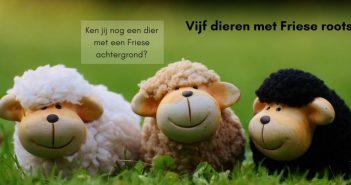 Vijf dieren met Friese roots