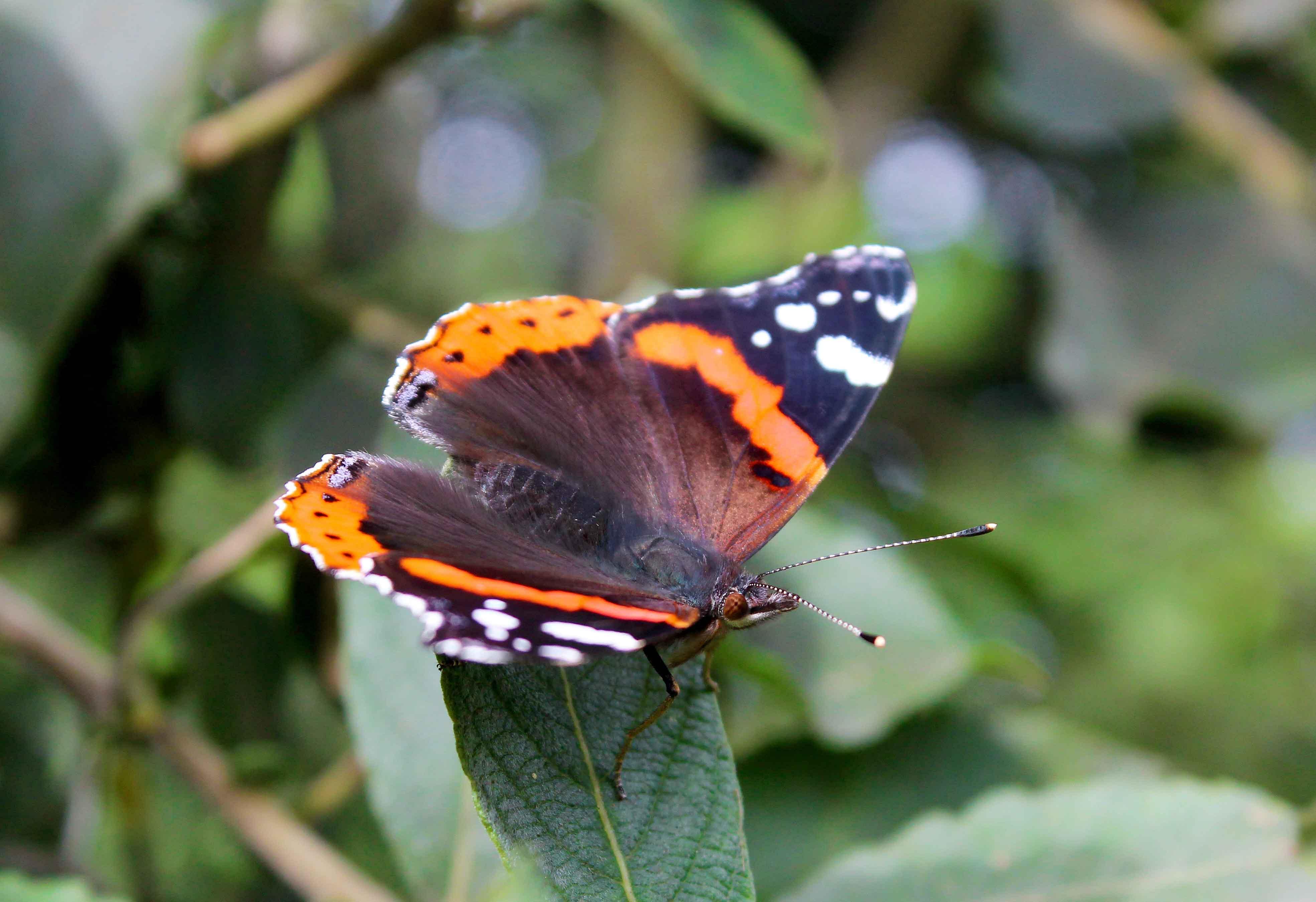 Op zoek naar zilte vlinders