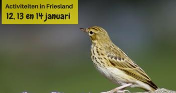 Wat te doen in Friesland op 12, 13 en 14 januari 2018