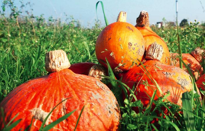 Oktober is pompoenenmaand
