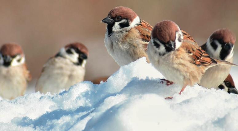 Creëer een winters vogelparadijs