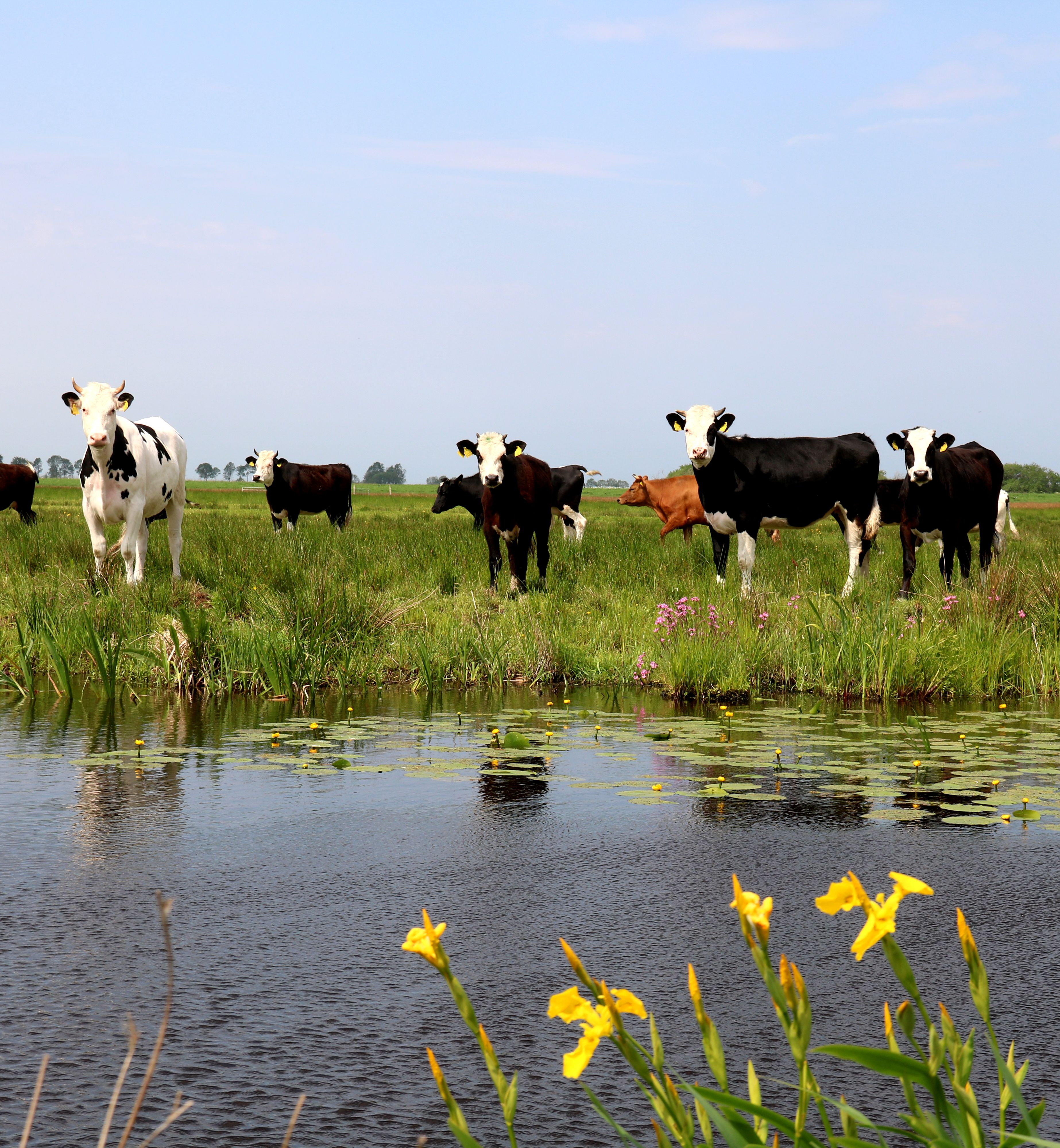 Natuurinclusieve landbouw - in verschillende tinten groen