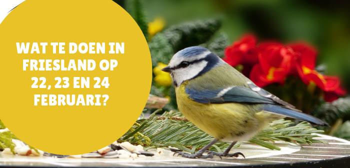 Wat te doen in Friesland op 22, 23 en 24 februari 2019?