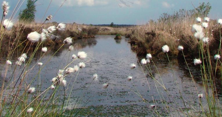 Ontdek groen Ooststellingwerf
