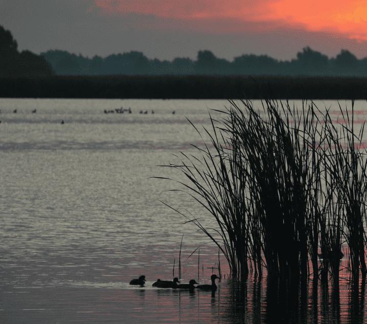 Vijftig jaar Lauwersmeer