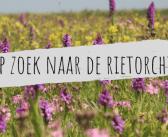 Op zoek naar de rietorchis met Fokko Bosker