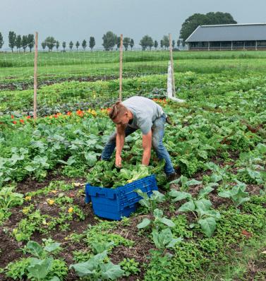 Smaakvolle snijbiet van Yn'e Sinne Farm