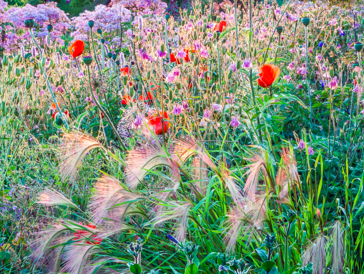 Tuinieren in samenwerking met de natuur