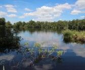 It Fryske Gea start met online natuurexcursies