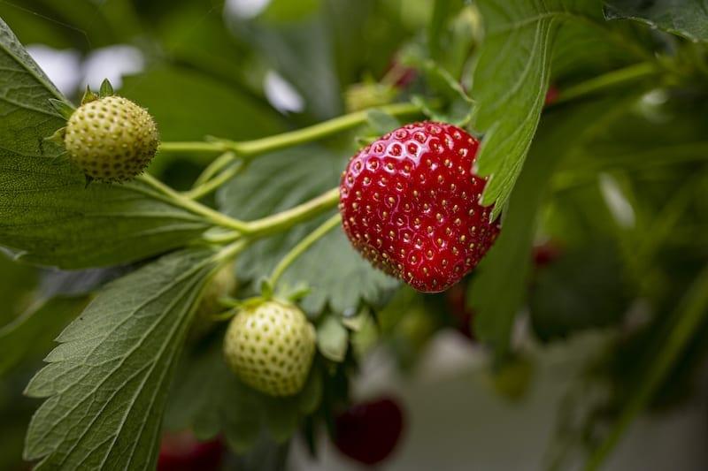 Zoet, zoeter, zoetst: simmerkeninkjes van Simmerfruit