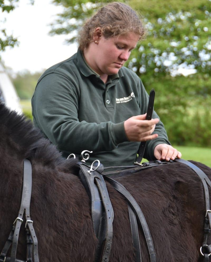 Voor paarden, uit leer gesneden