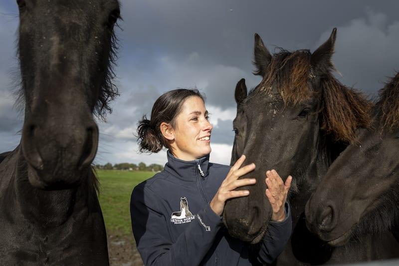 Elegante YouTube-sterren: Friese paarden uit Goënga
